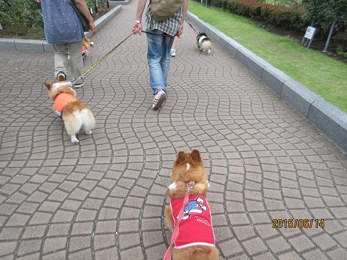 ヴェルニー公園お散歩