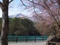 gosikinuma-sakurakesiki3-web300.jpg