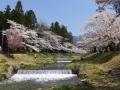 kanonjigawasakura7-web300.jpg