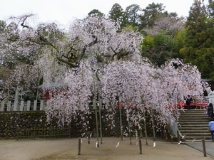 ogawasuwajinjya-sidare2-web300.jpg