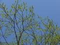 yanagi-sime1-web300.jpg