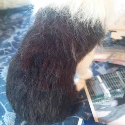 羊毛アルパカ毛0330-3