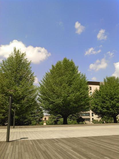 東工大大岡山キャンパスのイチョウ並木 新緑の季節