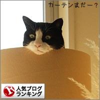 dai20141216_banner.jpg