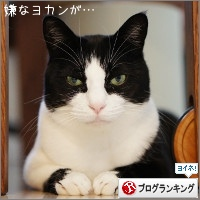 dai20141226_banner.jpg