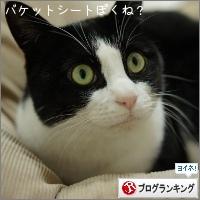 dai20150121_banner.jpg