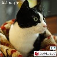 dai20150122_banner1.jpg