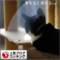 dai20150130_banner.jpg