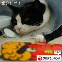 dai20150203_banner.jpg