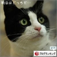dai20150206_banner.jpg