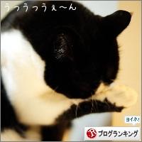 dai20150209_banner.jpg