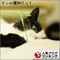 dai20150210_banner.jpg