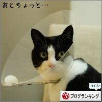 dai20150212_banner.jpg