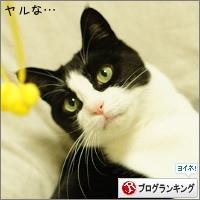 dai20150213_banner.jpg