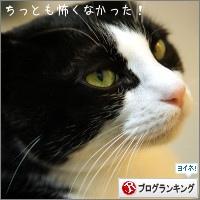 dai20150216_banner.jpg