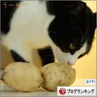 dai20150218_banner.jpg