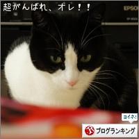 dai20150223_banner.jpg