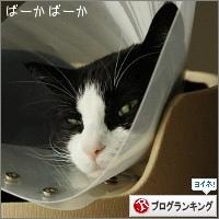 dai20150226_banner.jpg