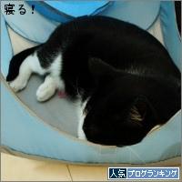 dai20150313_banner.jpg
