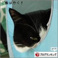 dai20150317_banner.jpg