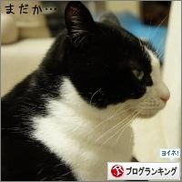 dai20150320_banner.jpg