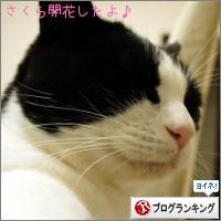 dai20150323_banner.jpg