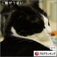 dai20150409_banner.jpg