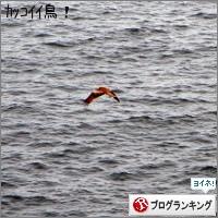 dai20150413_banner.jpg