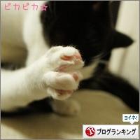 dai20150414_banner.jpg