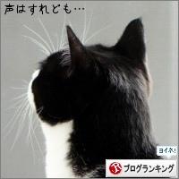 dai20150424_banner.jpg
