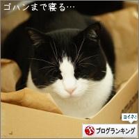 dai20150508_banner.jpg