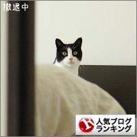 dai20150514_banner.jpg