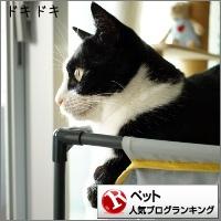 dai20150521_banner.jpg