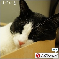 dai20150526_banner.jpg
