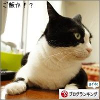 dai20150527_banner.jpg