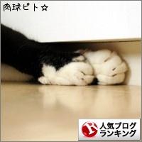 dai20150604_banner.jpg