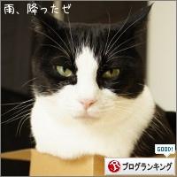 dai20150609_banner.jpg