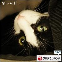 dai20150611_banner.jpg