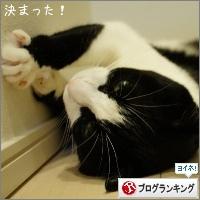 dai20150615_banner.jpg