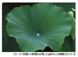 NBCI_rotus_effect_image.jpg