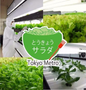 tokyometro_tokyo-salad_plant-factory_image.jpg