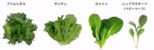 tokyometro_tokyo-salad_plant_examine_image.jpg