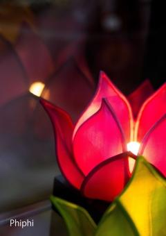 蓮のランプ2