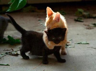 ダンソン猫