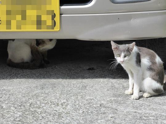 琉球猫002