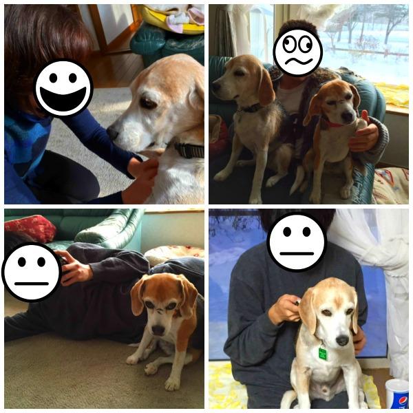 PicMonkey Collage2014123003s