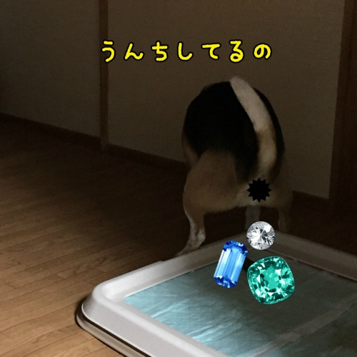 IMG_0495ss.jpg