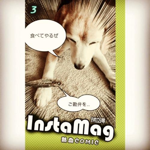 IMG_1137ss.jpg