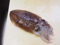 モンゴウイカ捌き刺身パスタ01