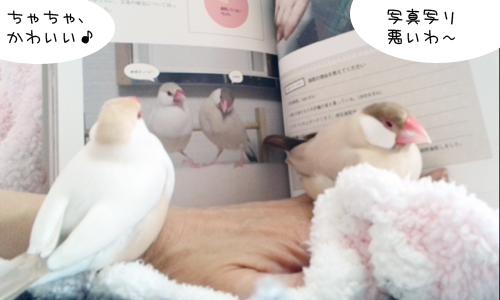 文鳥式生活のとびら_2
